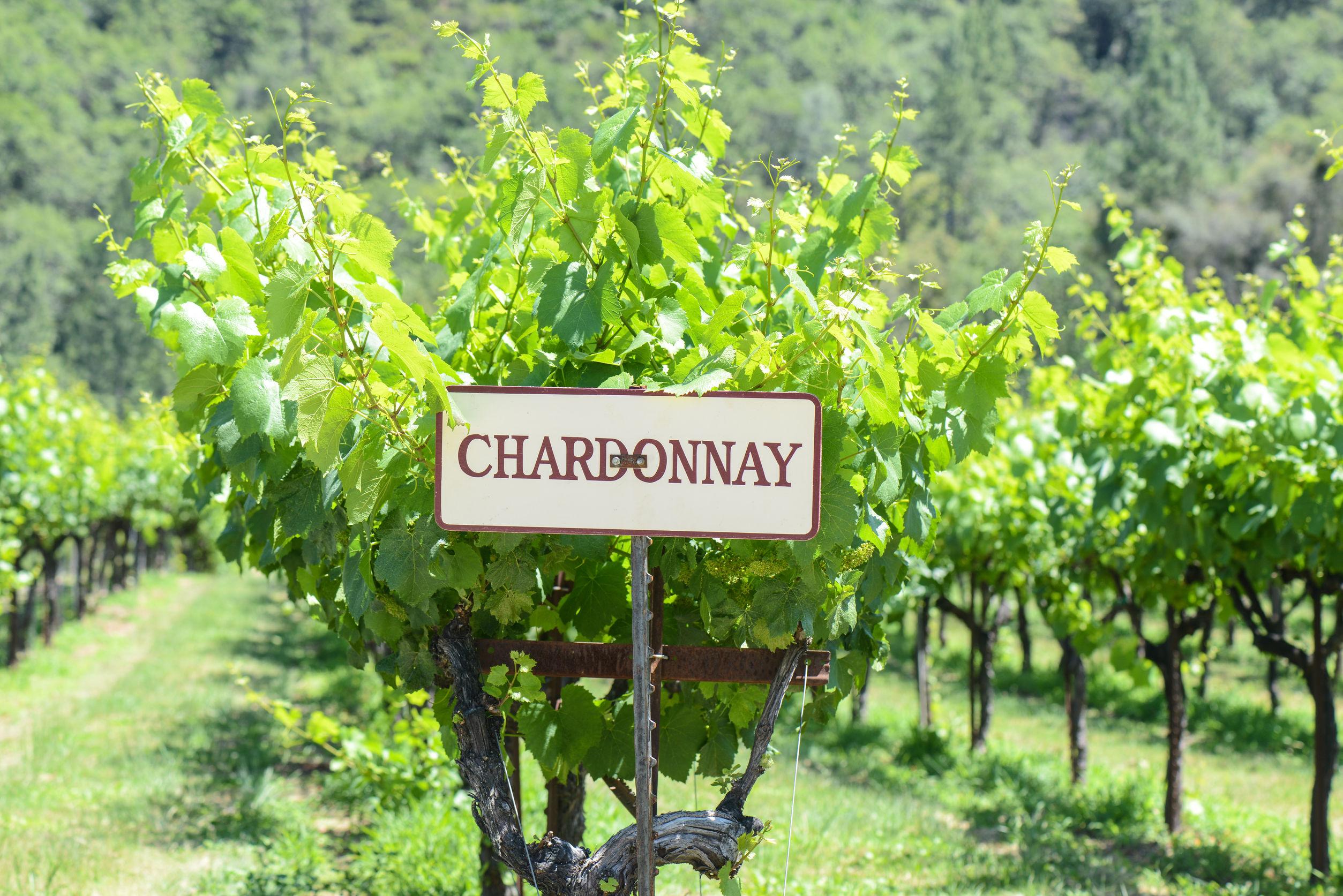 The Beginner's Guide to Chardonnay | O'Looney's Wine & Liquor